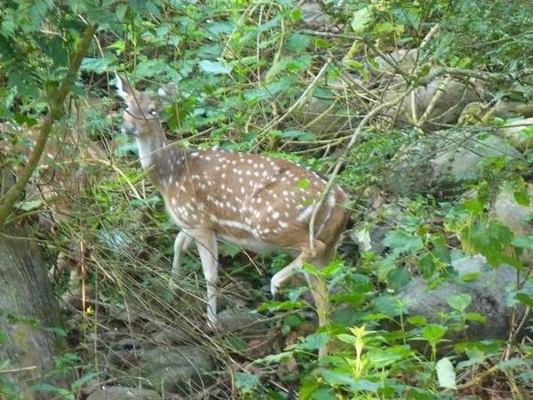 Un daim dans les bois centerblog - Un matin dans les bois ...